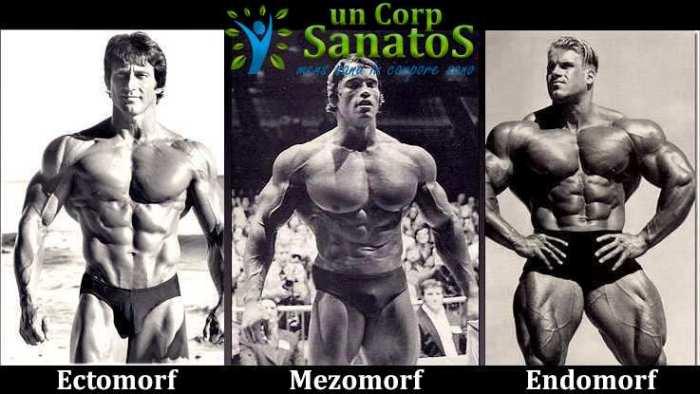 tipuri somatice ectomorf mezomorf endomorf