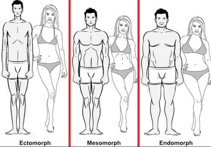 ectomorf mezomorf endomorf