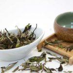 ceai alb planta camellia sinensis
