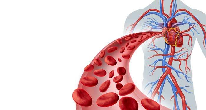 globulele rosii