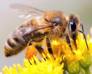 mod de administrare polen crud