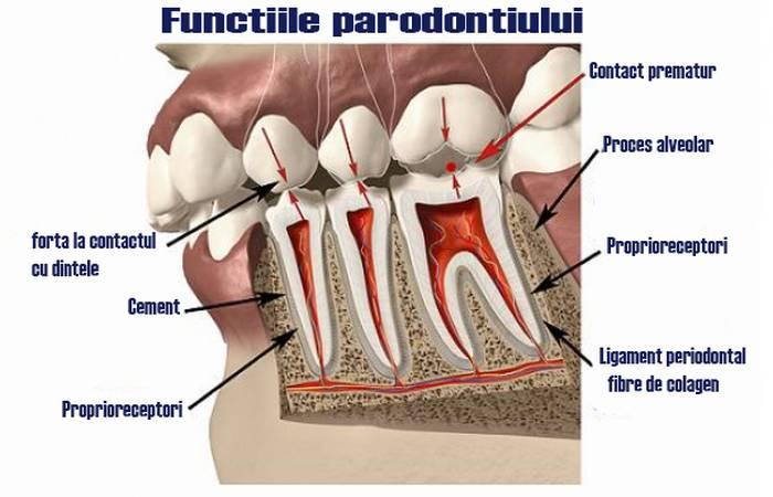 Ce este Parodontiul