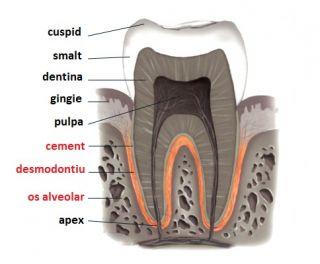 parodontoza riscuri
